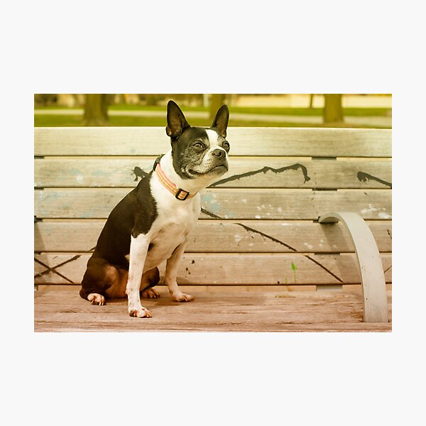 Multi-Coloured Bench Warmer Photographic Print