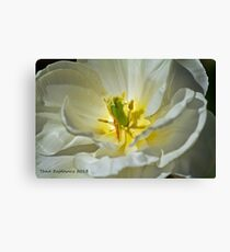 Pistil and stamen Canvas Print