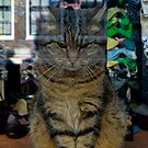 Amsterdam Shop Cat by antonio55