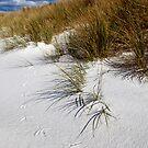Tip-toe through the sand dunes by Stephanie Johnson