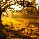 Golden Sunset by mlphoto