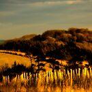 Golden Vista by mlphoto