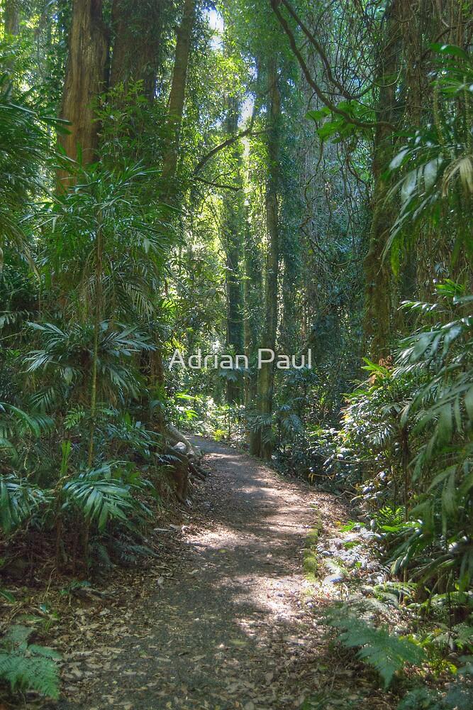 Rainforest Track, Dorrigo National Park, NSW by Adrian Paul