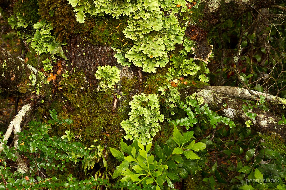 Forest Floor - Cradle Mountain NP by pennyswork