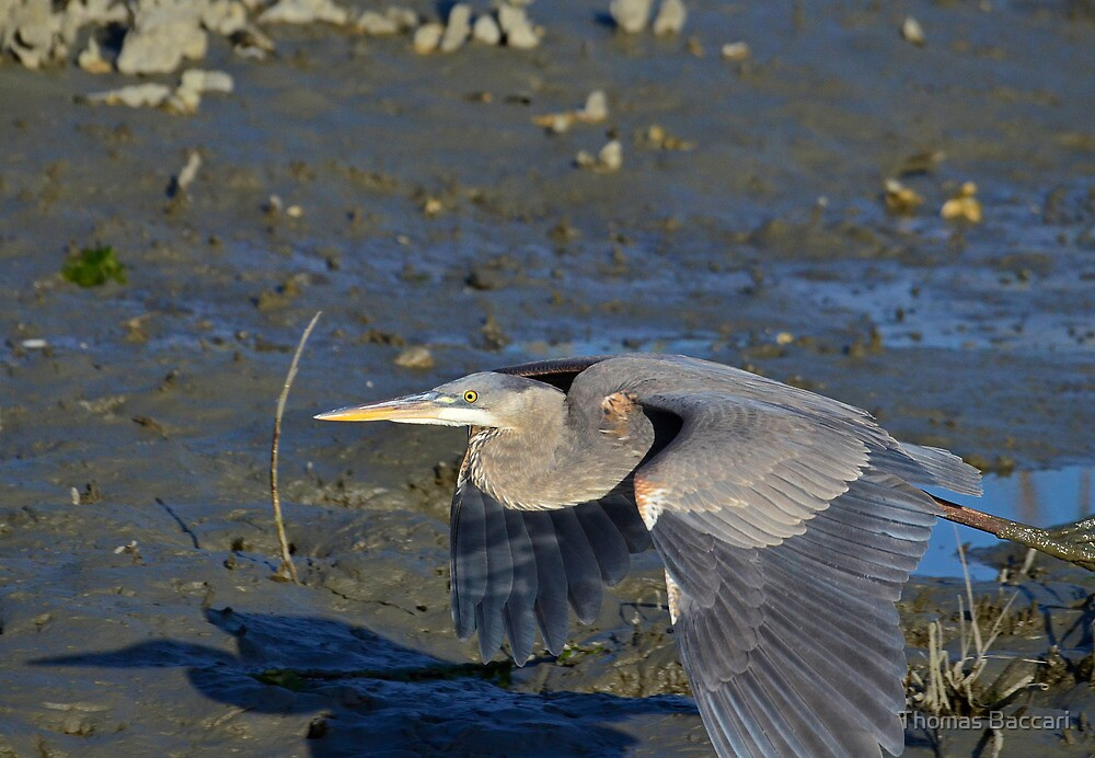 Flying Real Low by TJ Baccari Photography