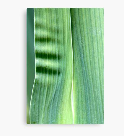 spring green Canvas Print