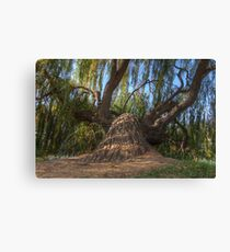Leaning Tree HDR Canvas Print