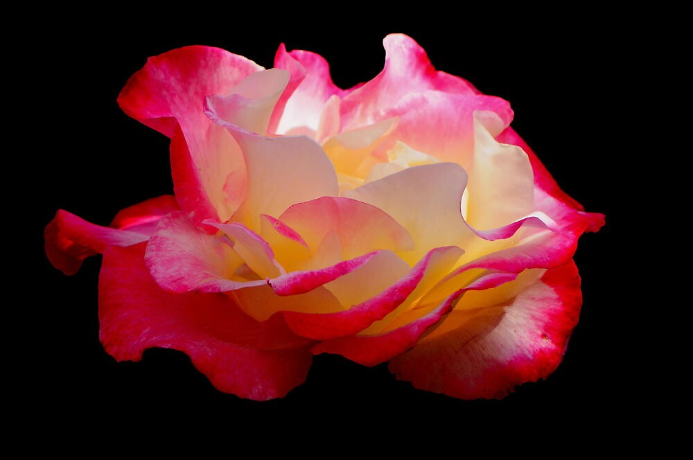 THE ROSE by RoseMarie747
