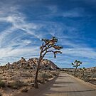 A Mojave Morning by Zero Dean