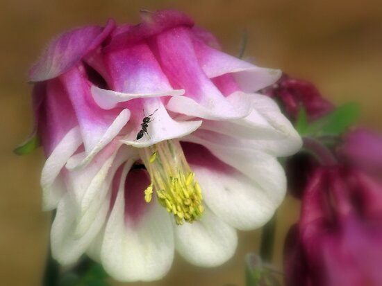 Searching For Nectar by Julie's Camera Creations <><
