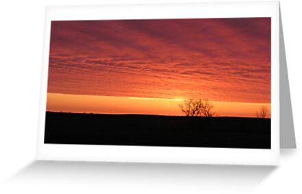 Blazing Plains by Greg Belfrage
