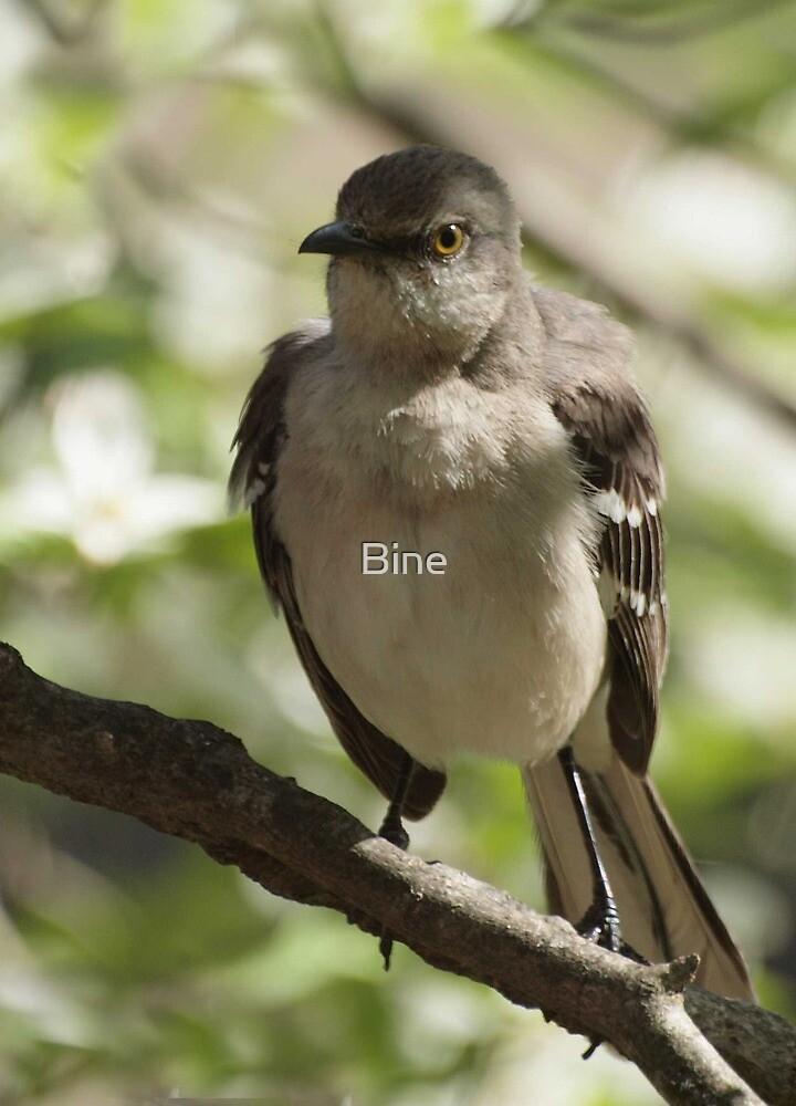 Mockingbird by Bine