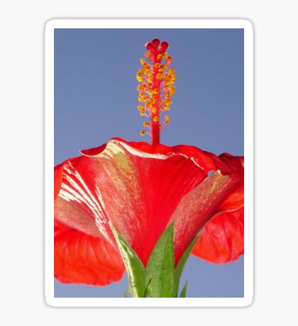 Tropical Red Hibiscus Flower Against Blue Sky Sticker