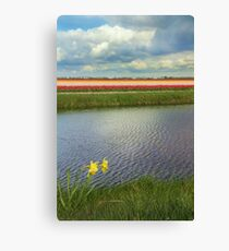 Tulip fields 4 Canvas Print