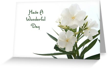 White Oleander Isolated Have A Wonderful Day Greeting  by taiche