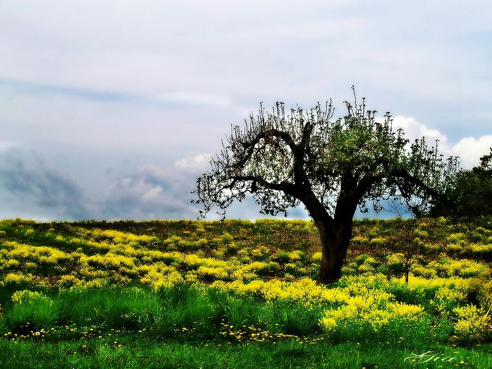 """""""Alone In The Field"""" by Gail Jones"""