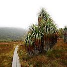 Pandani Path by Kylie Reid
