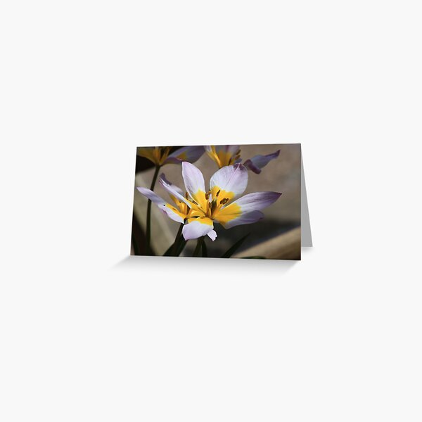 Lilac Lily Greeting Card