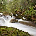 Tanjil River West Branch by Travis Easton