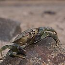 Crab Grab by ruleamon