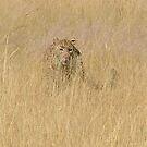 Hunting by Pauline Adair