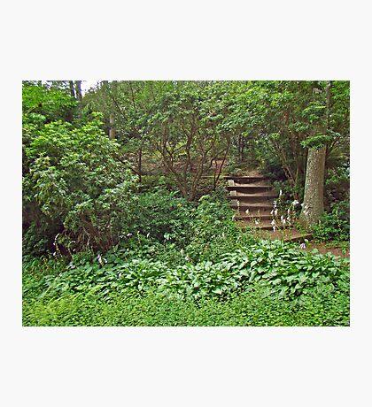 Spohr Gardens - Quissett - Falmouth - MA - Cape Cod Photographic Print