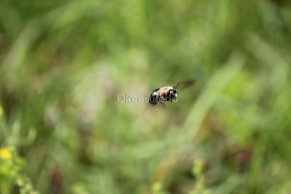Carpenter Bee keeping watch. by Okeesworld