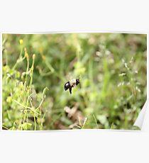 The Bee o_O Poster