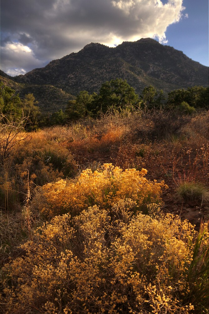 Wiiliamson Valley Spring by Bob Larson