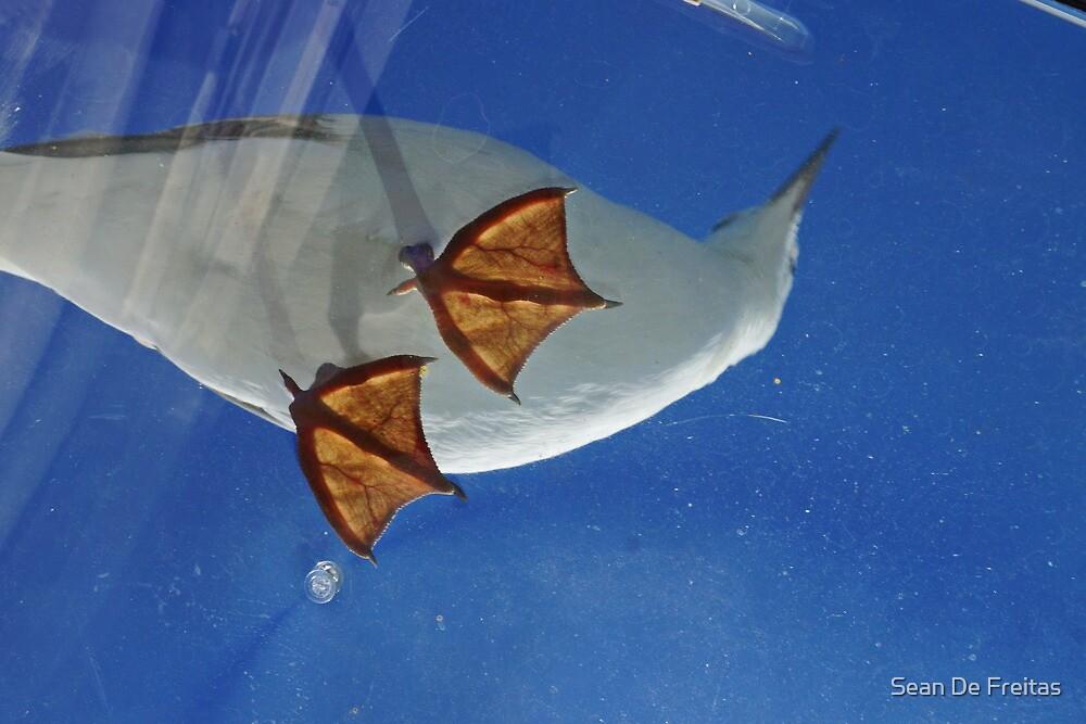 Seagull feet - Mallacoota, Victoria by PC1134