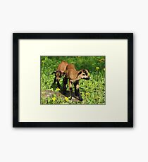 We Are Twins Framed Print