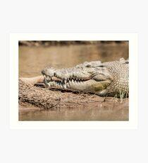 Saltwater crocodile (Crocodylus porosus) Art Print
