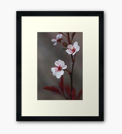 Plum Gorgeous ~ Framed Print