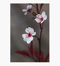 Plum Gorgeous ~ Photographic Print
