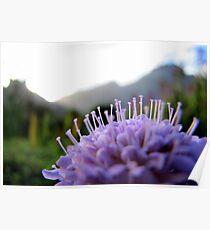 Kirstenbosch Poster