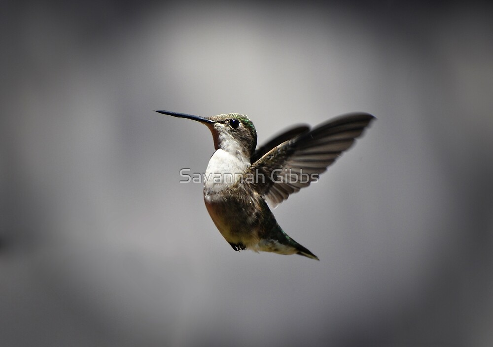 Hummingbird by Savannah Gibbs