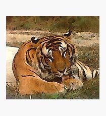 Lazy Tiger Photographic Print