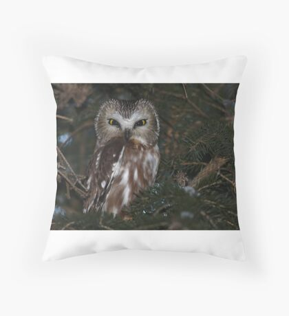 Saw-whet Owl Throw Pillow