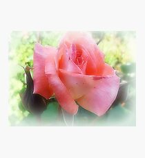 Once upon a Dream -Rose Photographic Print