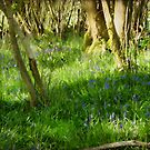 A Spring Day in Purbeck by viennablue