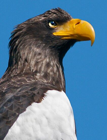 Does my Beak Look Big in Yellow? by Krys Bailey