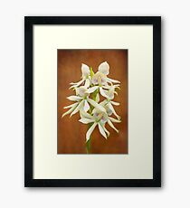Flower - Orchid - A gift for you  Framed Print