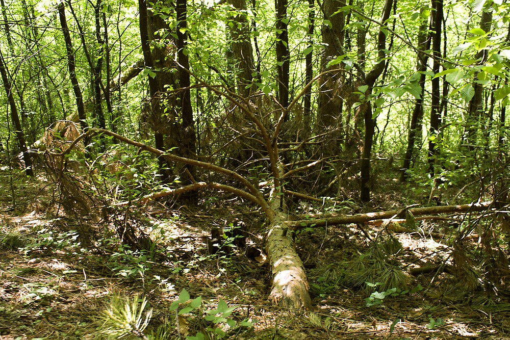 old-growth forest by slavikostadinov