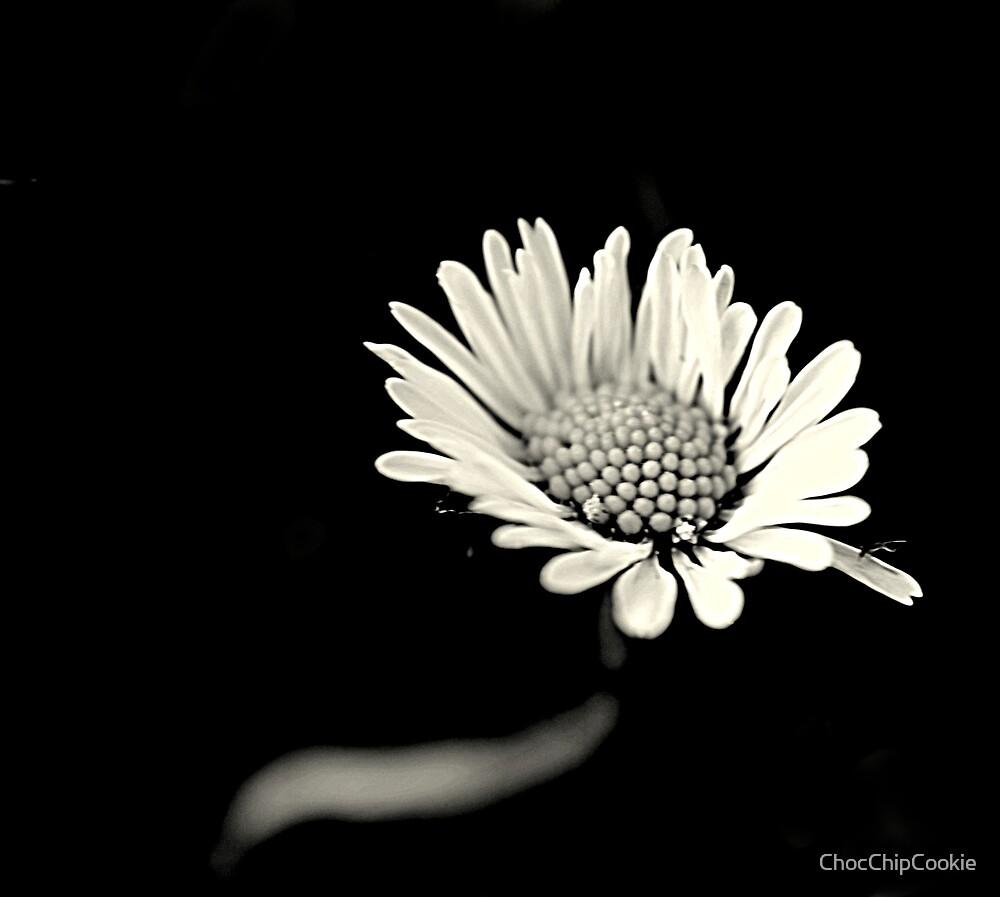 Daisy by ChocChipCookie