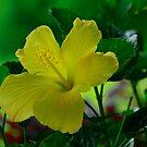 Yellow Beauty by Brenda Burnett