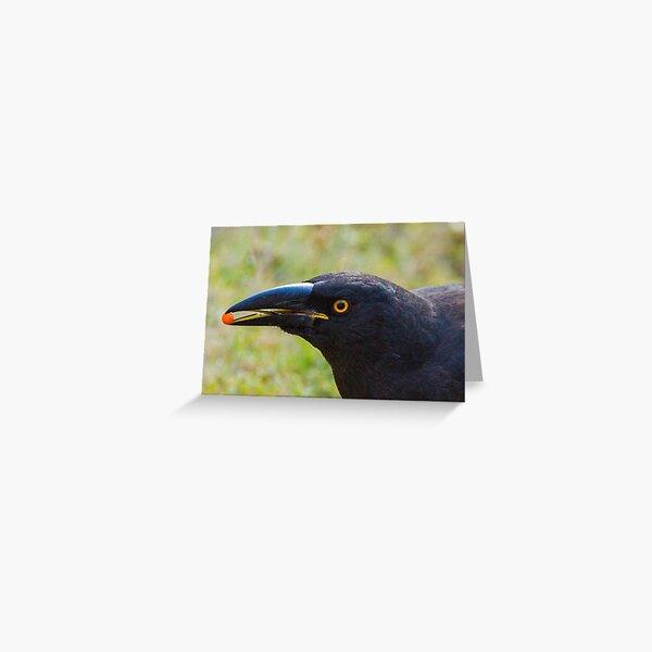beak detail of the currawong Greeting Card