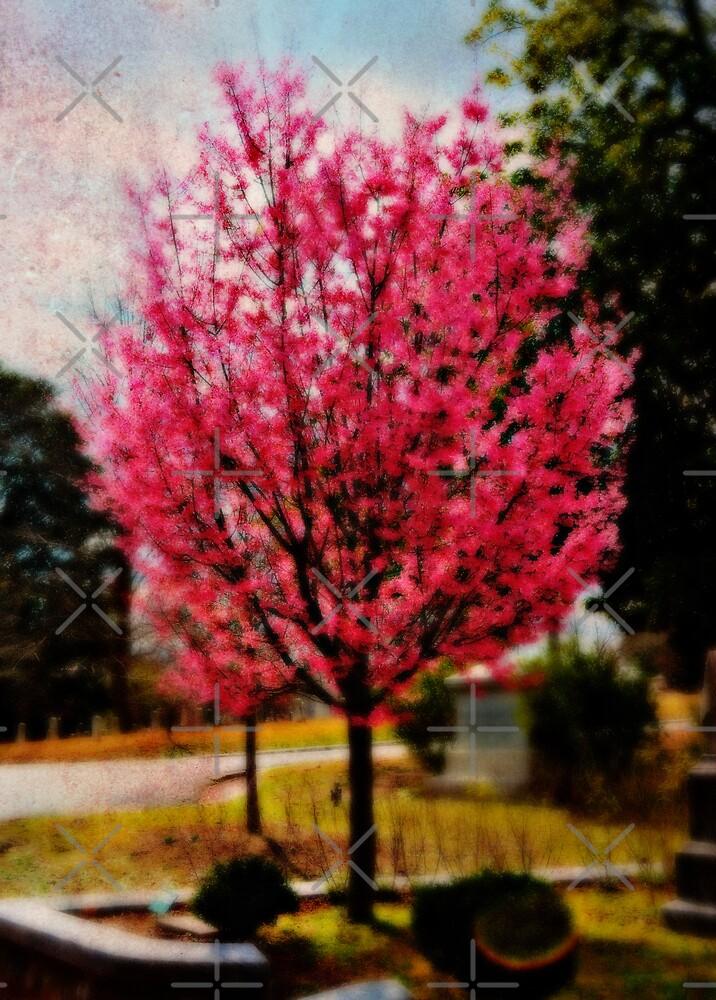 Cherry Blossom in Oils by Scott Mitchell