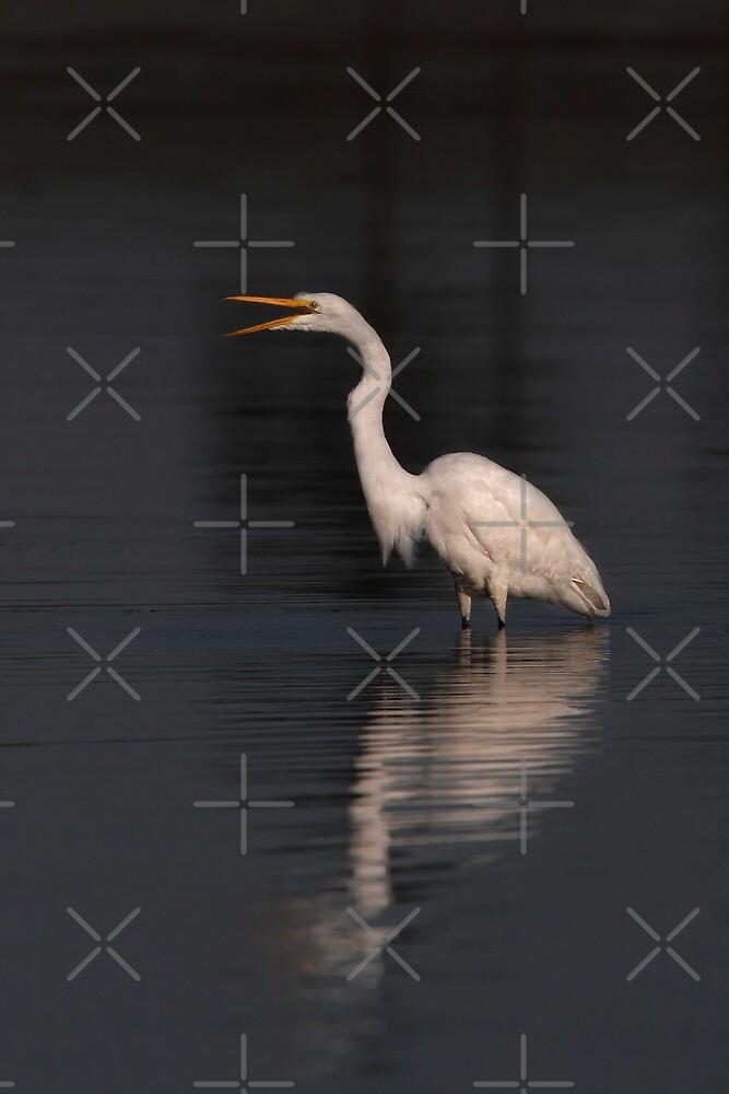 Great Egret by Jim Cumming