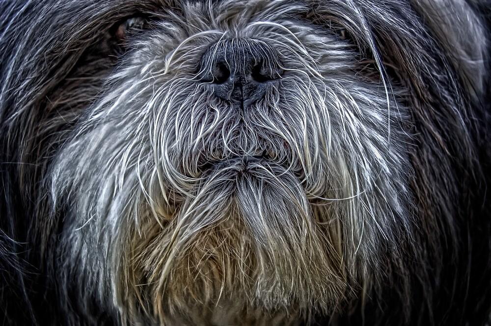 DOG by winnysart