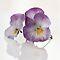 Lavender Pansy/Viola - Lovely Lavender
